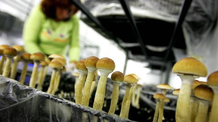 mgic mushroom